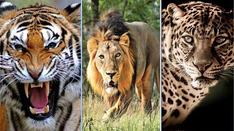 ગુજરાતનું ગૌરવ વધ્યું, 3 હિંસક પ્રાણીઓ ધરાવતું પહેલુ રાજ્ય બન્યું