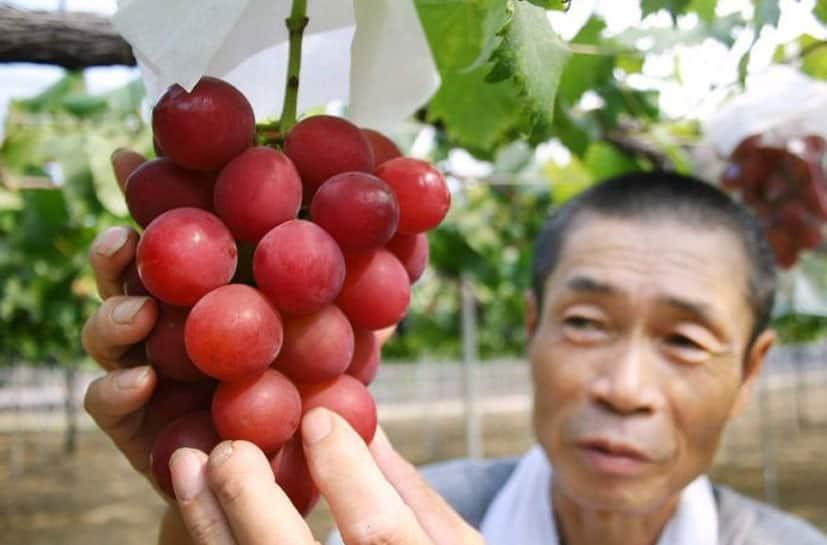 દુનિયાનાં સૌથી મોંધા ફળો, કિંમત સાંભળીને આંખે અંધારા આવી જશે