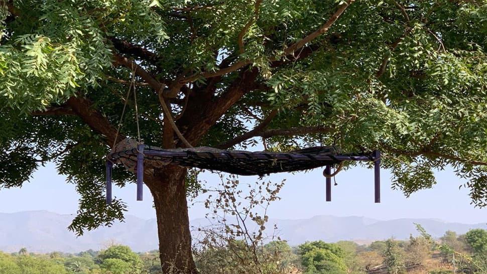 ગુજરાતના આ સ્થળે 6 મહિનાથી ન્યાય માટે ઝાડ પર લટકી રહ્યો છે યુવકનો મૃતદેહ