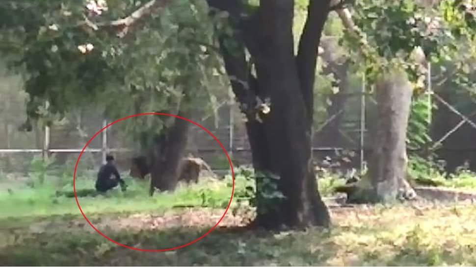 VIDEO : દિલ્હીમાં પ્રાણી સંગ્રહાલયમાં અચાનક સિંહના પિંજરામાં કૂદ્યો યુવક અને પછી....!!!