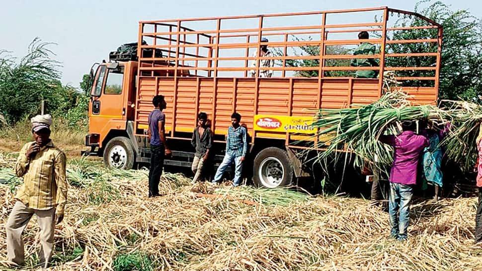 કચ્છ : પાકિસ્તાન સરહદેથી તીડ ઘુસતા ખેડૂતોની ઉંઘ હરામ થઇ