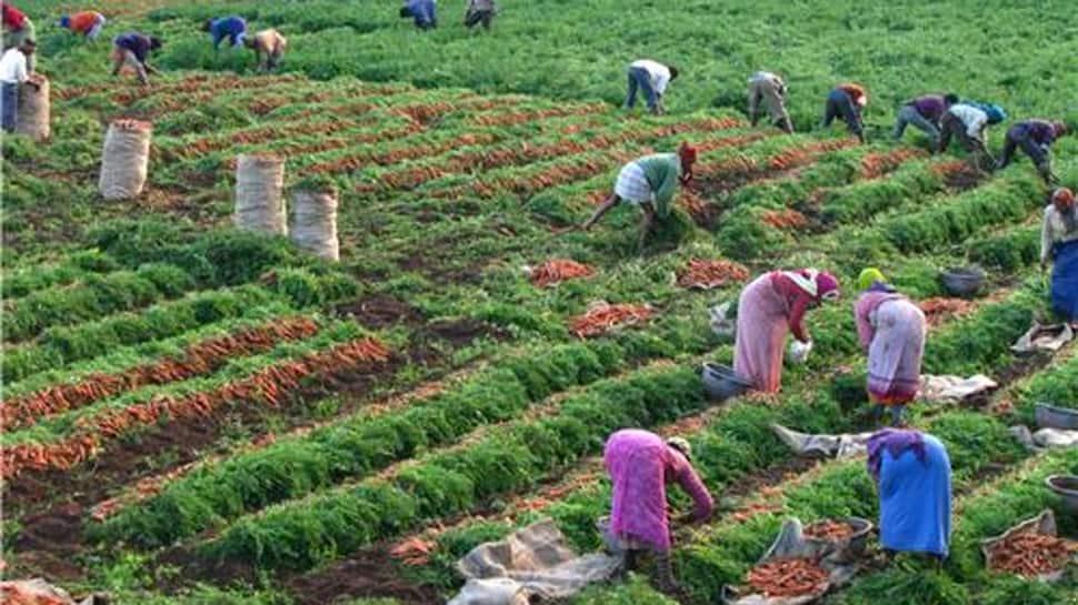 પાટણના ખેડૂતોને ગાજર ખેતીએ કર્યા માલામાલ, કરી રહ્યા છે 'લાલ ચટ્ટાક કમાણી'