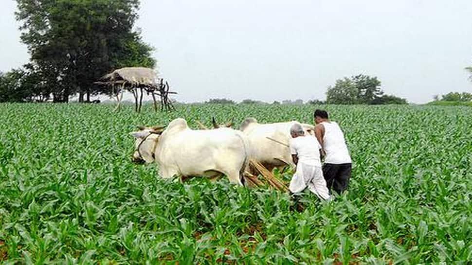નિરાશ ખેડૂતો માટે ગુજરાત બજેટ ફળ્યું, ગાયથી ખેતી કરનારા માટે કરાઈ મહત્વની જાહેરાત