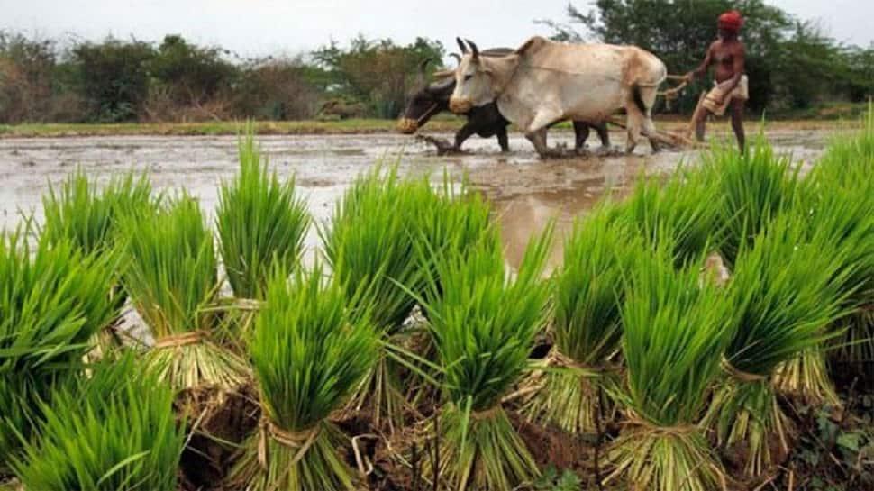 રાજ્ય સરકારનો ખેડૂતલક્ષી નિર્ણય, પાક ધિરાણની રકમ ચુકવવાની સમયમર્યાદામાં કર્યો વધારો