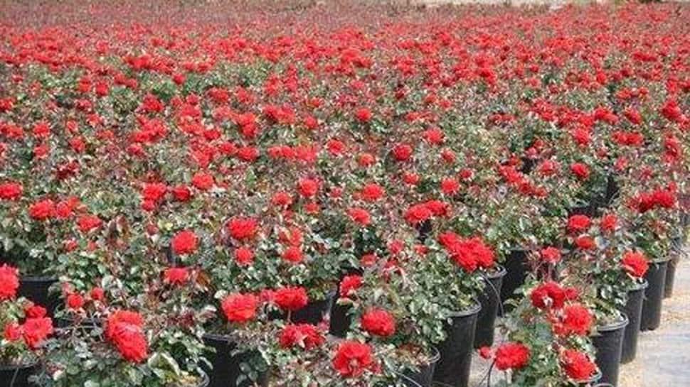 દુનિયાભરમાં ફેલાશે ગુજરાતના ફૂલોની સુગંધ, બસ જરૂર છે થોડી મદદની