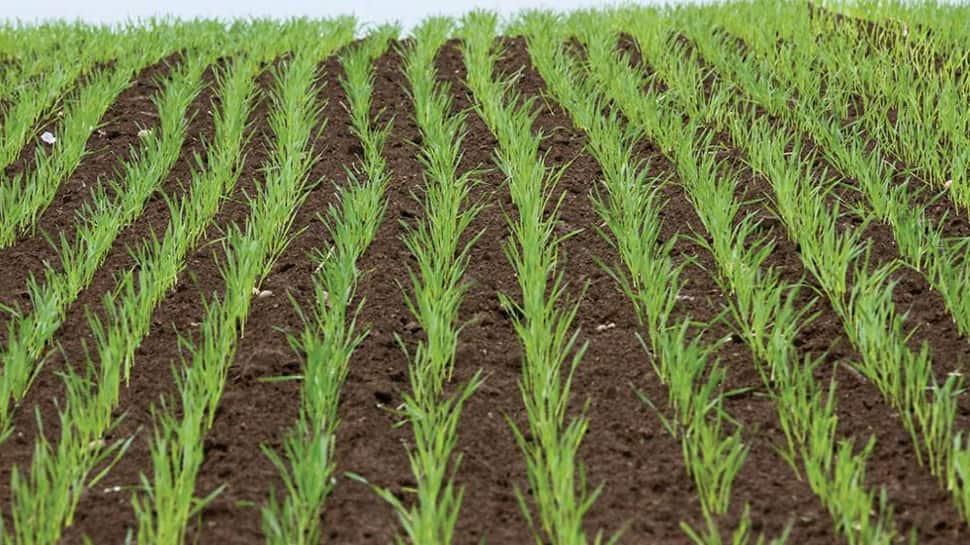 રાજસ્થાનમાં લો-પ્રેશર સક્રિય થતા ઉત્તર ગુજરાતમાં માવઠાની, શિયાળુ પાકમાં પણ ખેડૂતોને નુકસાનની વકી