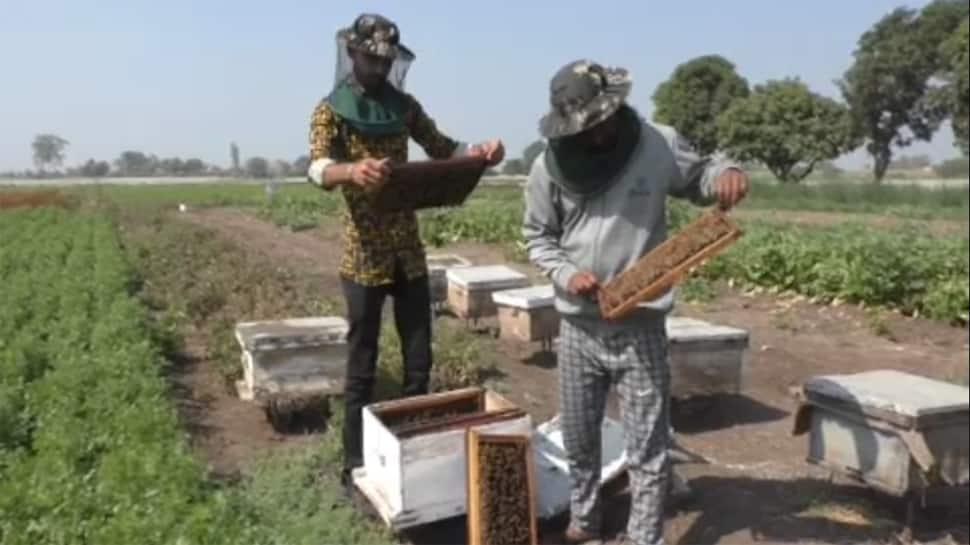 જુનાગઢના આ ખેડૂતે વધારાની આવક મેળવવાનો રસ્તો શોધી લીધો