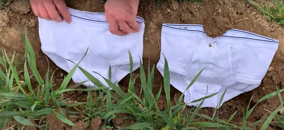 Viral News: કોરોનાકાળમાં આ જમીનમાં 2 સફેદ અંડરવેર કેમ દાટી રહ્યા છે લોકો? કારણ જાણી ચોંકી જશો