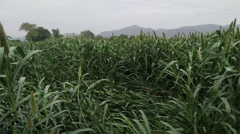 વાવાઝોડાથી ધોવાઈ ગયેલા ખેતરોનો સરવે કરીને સહાય ચૂકવશે ગુજરાત સરકાર