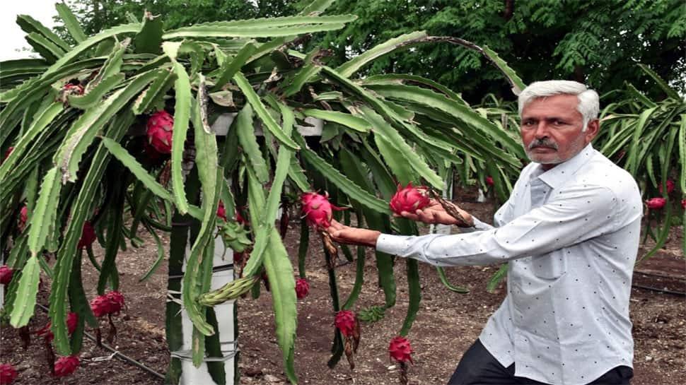 જામનગરના ખેડૂતે એવી ખેતી પર નસીબ અજમાવ્યું, જે ખર્ચા વગર આપે છે સીધો 3.25 લાખનો નફો