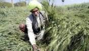 પ્રધાનમંત્રી કિસાન યોજનાઃ 4.74 કરોડ કિસાનોને આગામી મહિનાથી મળશે બીજો હપ્તો