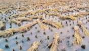 ખેડૂતોની માઠી દશા: દક્ષિણ ગુજરાતમાં 24 કલાકમાં વઘઇ અને ચીખલીમાં અઢી ઇંચ વરસાદ