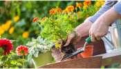 Gardening Tips: ઘરમાં ઉગાડેલા છોડની દેખરેખ માટે બનાવો Natural Fertilizer, જાણો કેવી રીતે