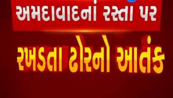 Terror of cattle on roads of Ahmedabad
