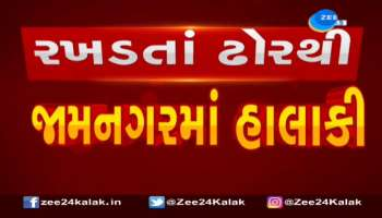 Trouble by stray cattle in Jamnagar