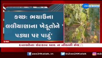 Kutch: Farmers of Bhachau's Laliyana are in a dilemma ... see news