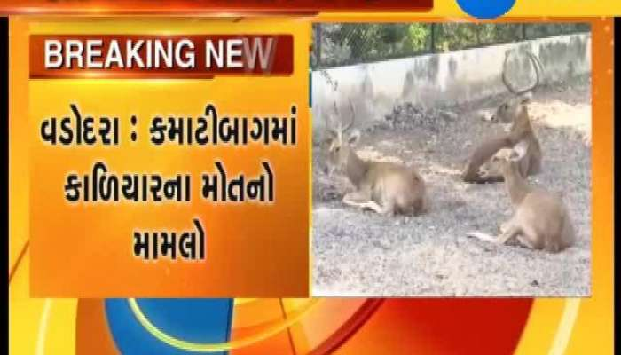 Vadodara  For 7 Black buck died VMSS gives notice to security company.