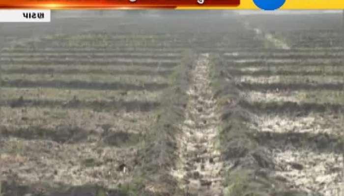 Patan Farmers fear crop loss due to shortage of irrigation water Zee 24 Kalak