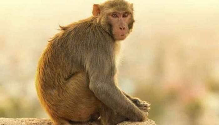 મહિલાને વાંદરા સાથે આવું કરવું પડ્યું ભારે, કોર્ટે ફટકારી 3 વર્ષની સજા