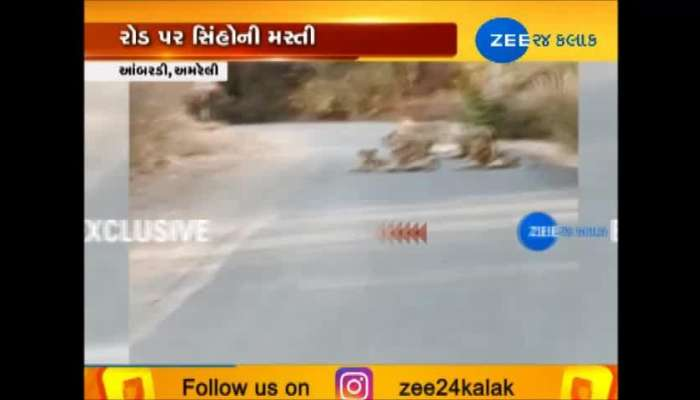 Twelve lions have come out on the road near ambardi