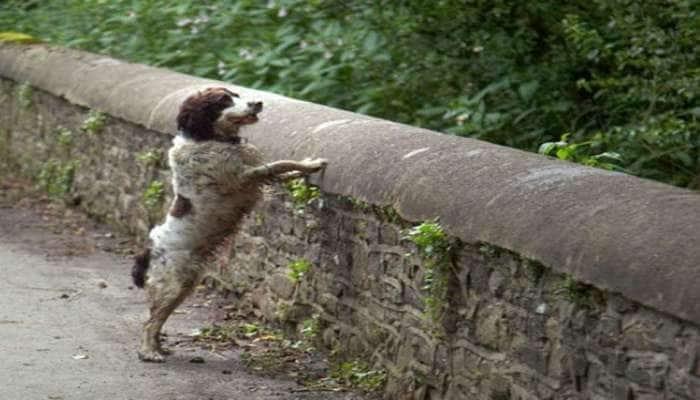 અત્યંત રહસ્યમયી પુલ, જે કૂતરાને પોતાની તરફ આકર્ષે છે અને પછી...જાણીને ચોંકી જશો