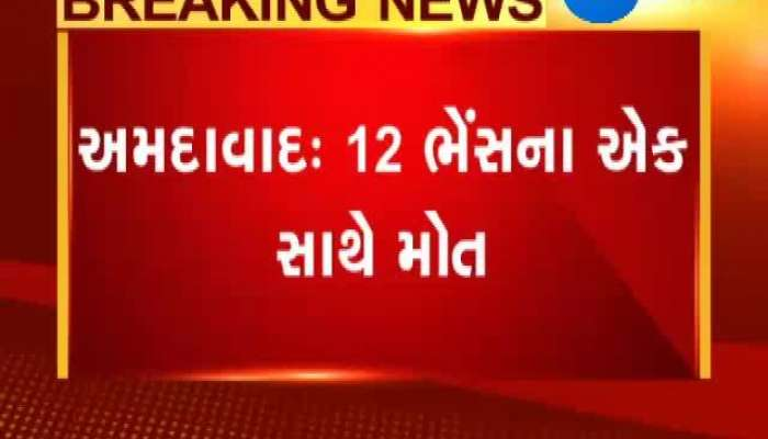 12 buffalo died due to electric shock