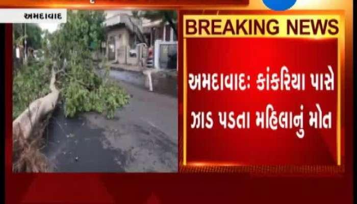 Ahmedabad: Woman Dies As Tree Falls on Her