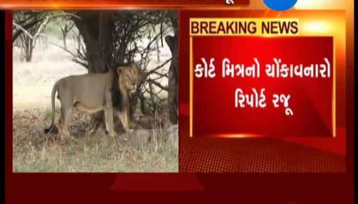 Gujarat: Untimely Death of Lions, Court Friend Provides Report