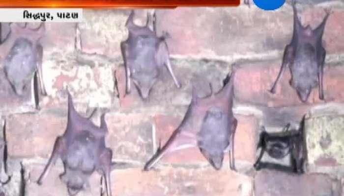 Sidhpur: Woman Lives Among Bats
