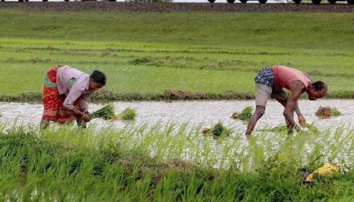 સમયસર વાવણી કરી મુહૂર્ત તો સચવાયું, પણ હવે ખેડૂતોને રોવાનો વારો આવ્યો, સૌરાષ્ટ્રમાં હાલત કફોડી