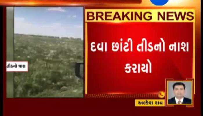 Banaskantha: Pesticides used to Curb Locust Attacks on Crops