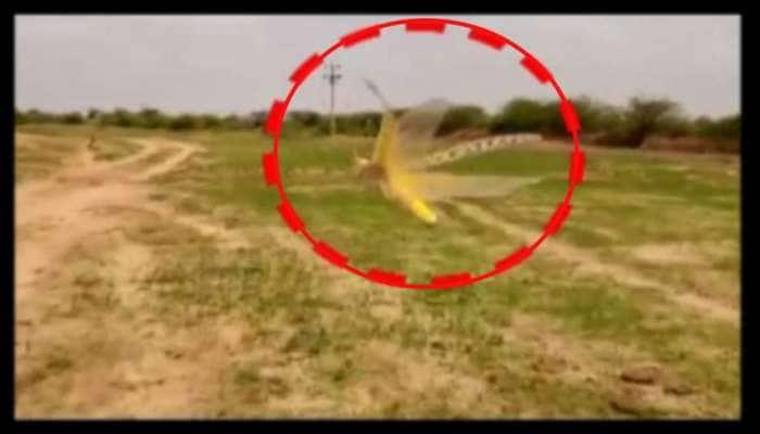 તીડનો આ Video જોઈને આવશે ચીડ : હવે તીડના ઈંડા ખેડૂતો માટે બન્યા માથાનો દુખાવો