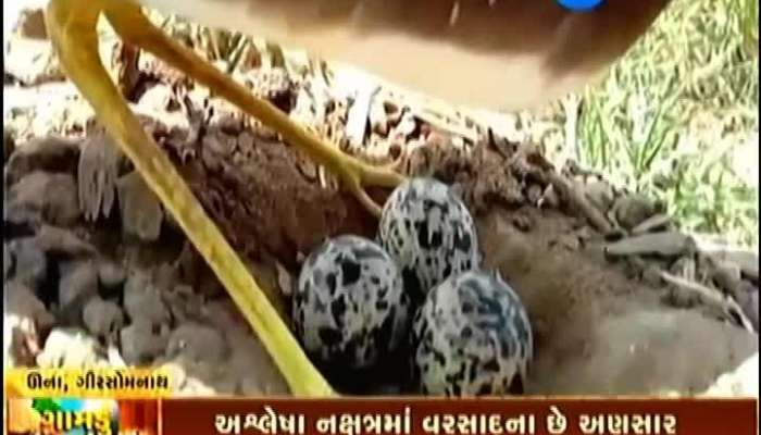 Una,Girsomnath: See Why Farmers Are Worried? 'Gamdu jage Che'