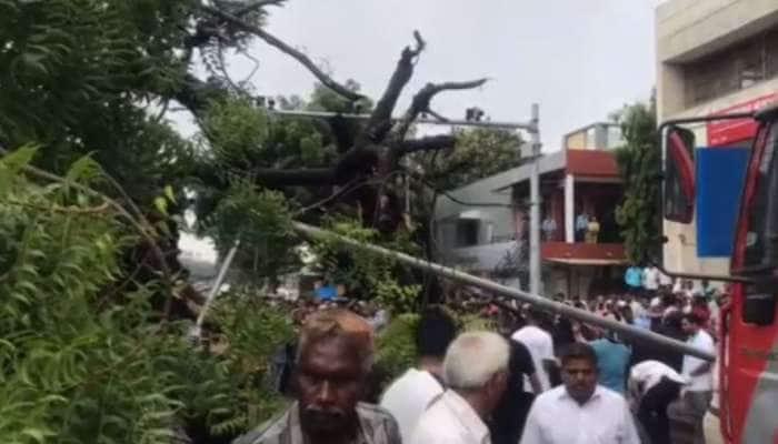 અમદાવાદ : વિશાળ લીમડાનું વૃક્ષ રીક્ષા પર પડતા ચાલકનું ઓન ધી સ્પોટ મોત