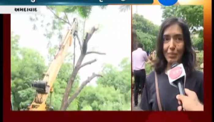 AMC Helps Woman To Re-erect Trees Planted In Memory of Her Father