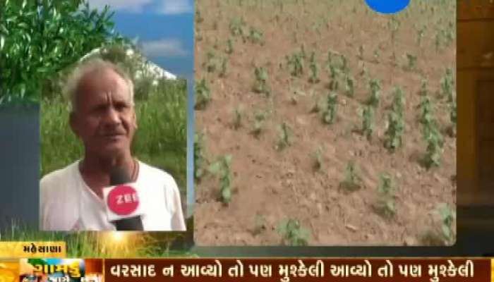 Mehsana: Farmers Worried As Crop Fails Due To Water Scarcity