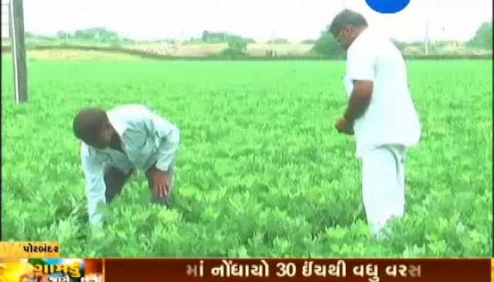 Porbandar: Farmers Relish Successful Crop Season, Gamdu Jage Che