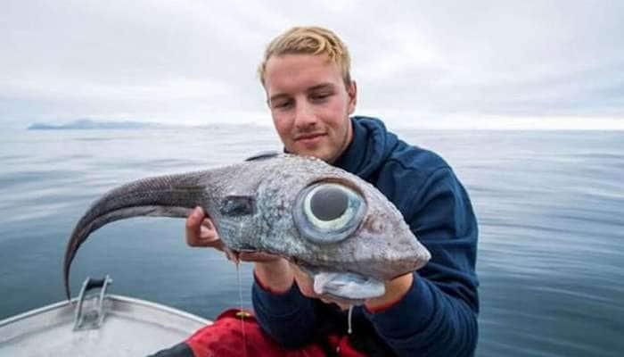 OMG..! પ્રથમ નજરે જોતાં જ ડરી જવાય એવી 'એલિયન માછલી' મળી આવી