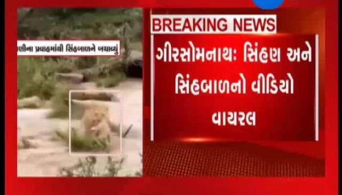 Viral video of Gir somnath
