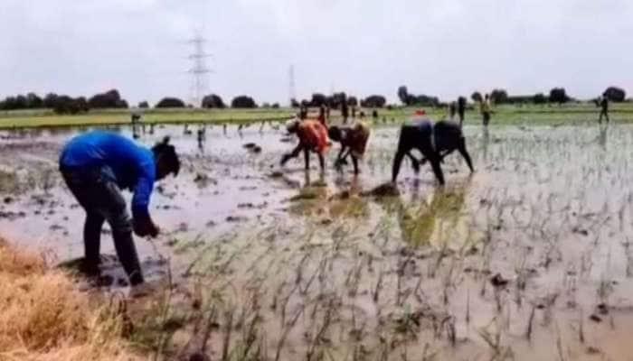 લીલા દુકાળને કારણે દક્ષિણ ગુજરાતના ડાંગર અને શેરડીના પાકને અંદાજે 60 કરોડનું નુકશાન