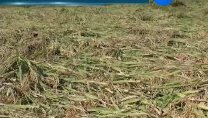 Situation Of Farmers At Navsari