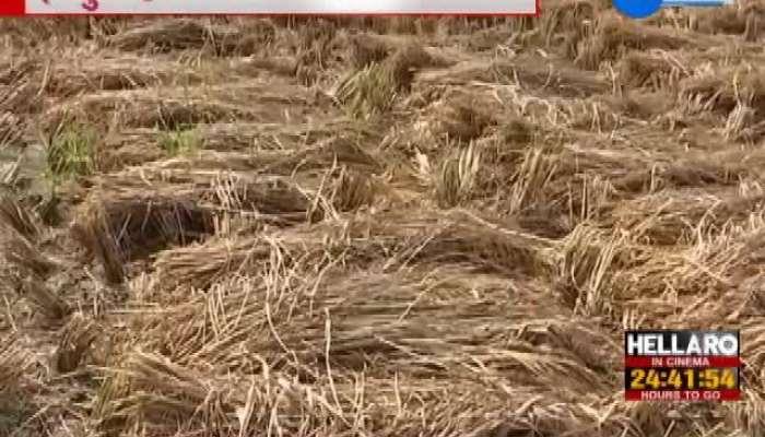 Agriculture Minister R C Faldu Says Hardik Patel Does His Job