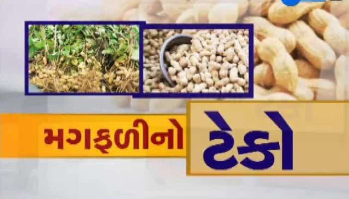 ZEE 24 Kalak Talk To Rajkot Farmers On Purchase Peanuts At Support Price