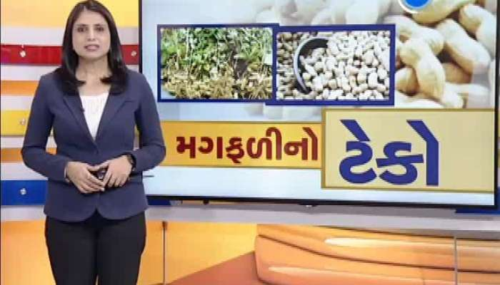 Started Buying Peanuts At Support Price, Farmers Worried About The Crop