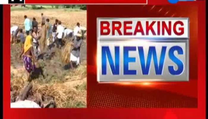 Reaction of farmers of Mehsana after relief package of state government