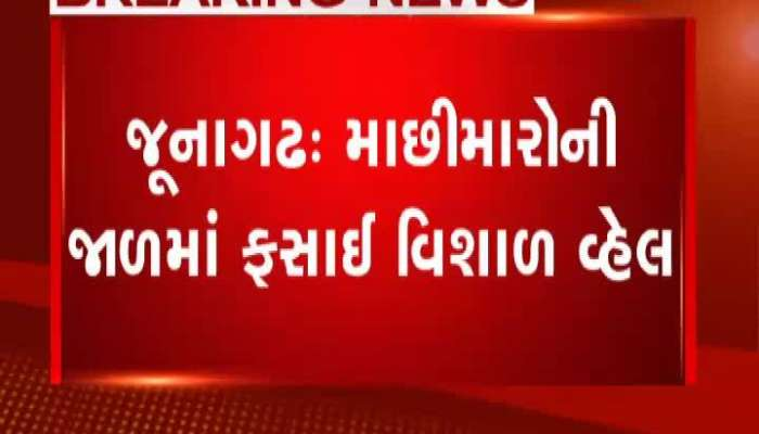 Whale Fish Caught In Trap Of Fishermen In Junagadh