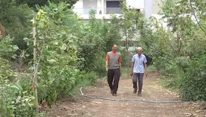 રાજકોટ શહેરમાં બન્યો ઓક્સિજન પાર્ક, જાપાની સિસ્ટમથી વાવ્યા 3000 વૃક્ષ