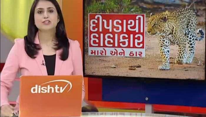 MLA Harshad Ribadiya Statement After Catch Leopard In Amreli