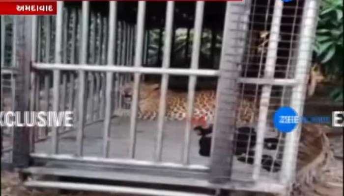 Forest Department Not Succeed To Caught Leopard