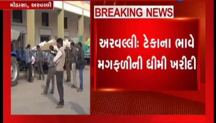 Peanuts Purchase: Farmers Anger For Slowing Down Peanuts Purchase In Modasa